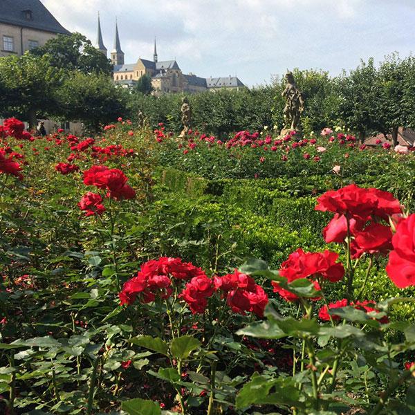 玫瑰花花海