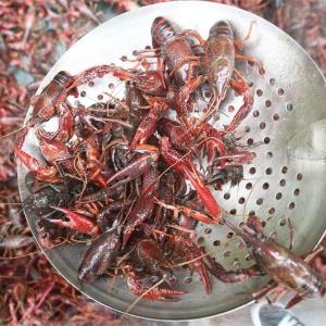 小龙虾养殖基地