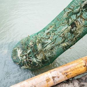 生态养殖大闸蟹