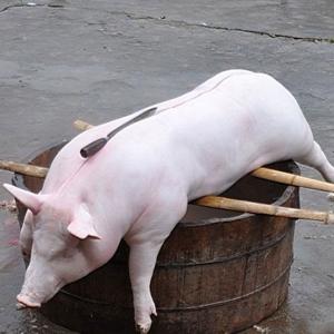 广安杀年猪